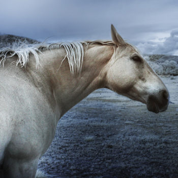 8760547514_4725f86814 -Infrared Storm Horse - by Greg Westfall